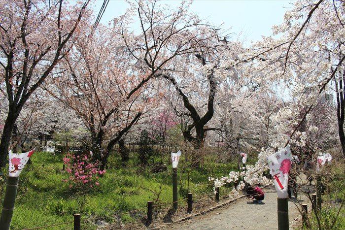 42桜苑を進む