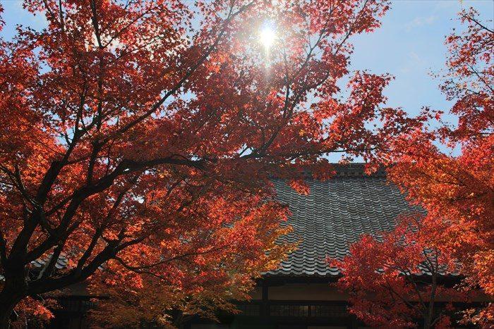 4建仁寺大書院の屋根と紅葉