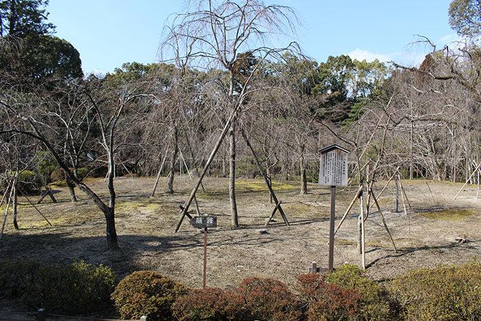 31.入ってすぐの枝垂桜