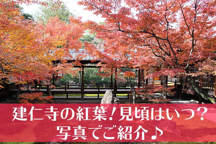 建仁寺の紅葉の見頃タイトル