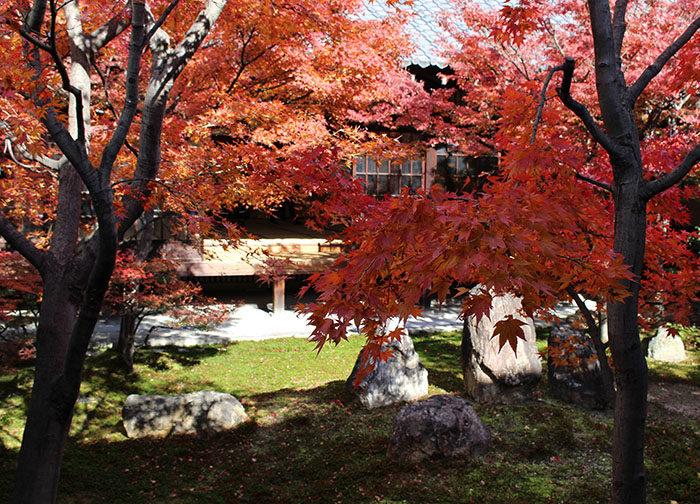 3建仁寺の紅葉:潮音庭南側3