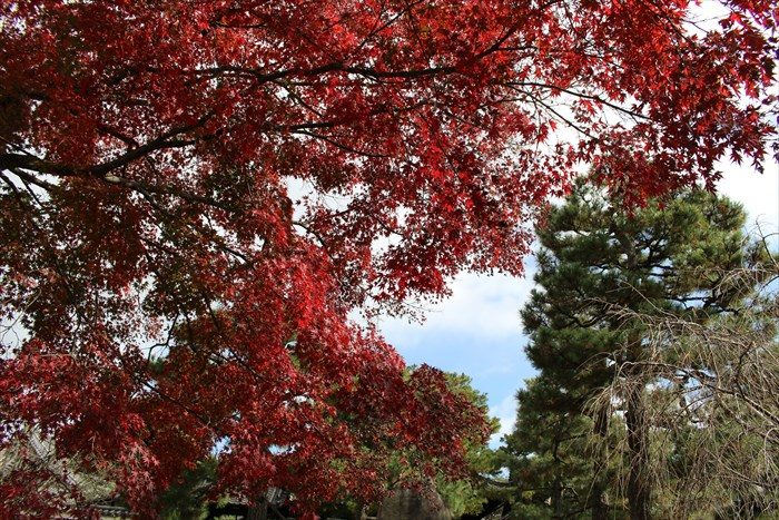 24建仁寺境内の紅葉