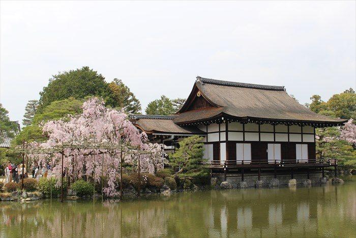 35.尚美館としだれ桜