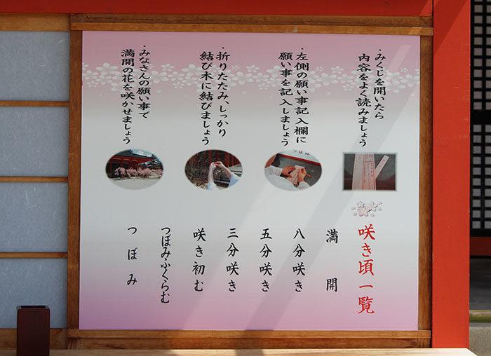 8.桜みくじのやり方