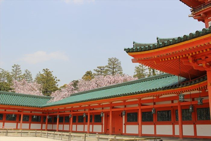 45.蒼龍楼と桜