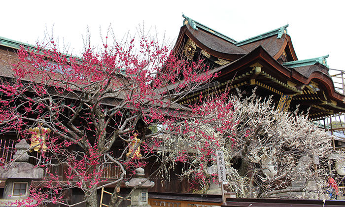 8.庭園側から、三光門と紅白の梅